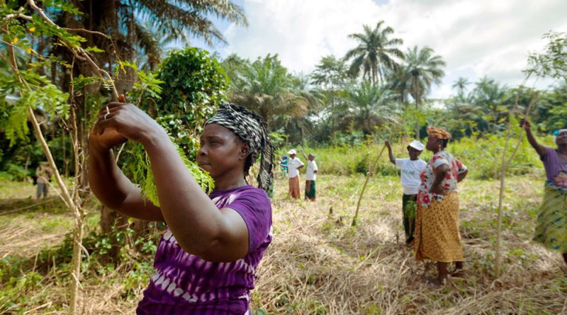 WHO Publishes Quality Criteria for Health National Adaptation Plans