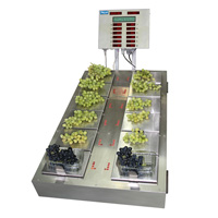 GRAPE PUNNET, grape punnet scale, packaging scale
